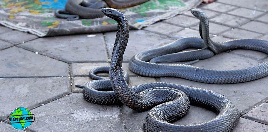 serpientes-marruecos-viajohoy Visita Marruecos