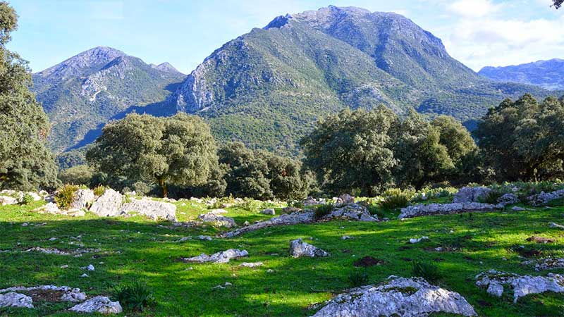 Parque-Natural-Sierra-de-Grazalema De viaje por la Costa del Sol – Disfruta España