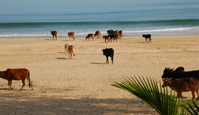 agonda-beach-india-2 La India y su Playa Solitaria, Agonda