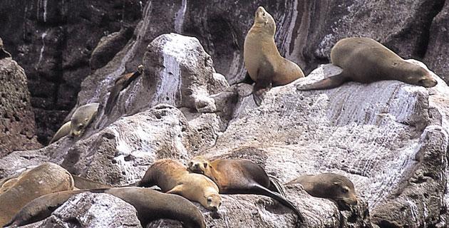 San-Pedro-Nolasco-Island